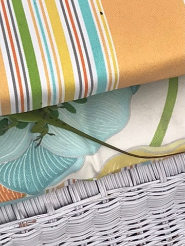 lizard between cushions